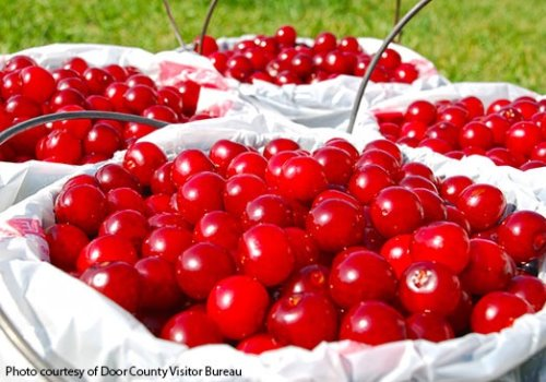 Door County U-Pick Cherries