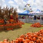Coconut Grove Pumpkin Fest Florida | upickfarmlocator.com