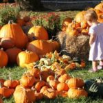 Priebes Pumpkin Patch Indiana | upickfarmlocator.com